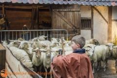 2014 Dorp in de kijker schapendrijver